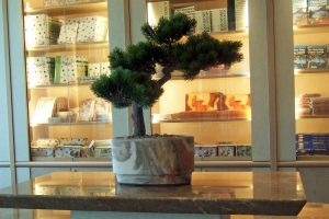 Artificial bonsai tree display